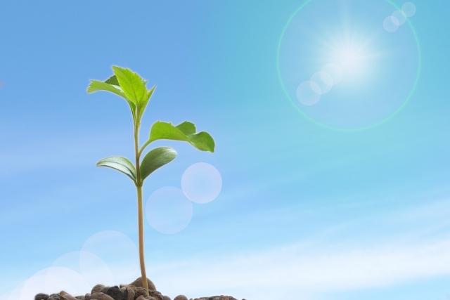 成長する草木と太陽